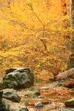 odrzutowiec jesieni Obraz Stock