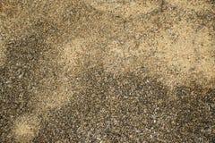 Odsłonięta łączna betonowa powierzchnia Zdjęcia Royalty Free