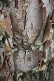 Odsłonięte warstwy drzewna barkentyna w Aberdeen, Maryland obrazy stock