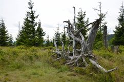 Odsłonięty korzeń w dzikim krajobrazie Gigantyczne góry obrazy stock