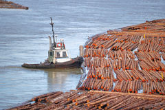 Odtransportowywać Surowego szalunek na rzece Obrazy Stock