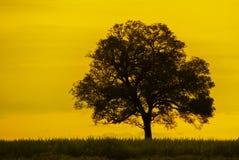 Odwiecznie drzewo pomarańczowego nieba tło fotografia royalty free
