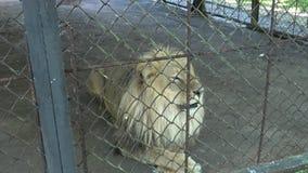 Odwiedzać zoo zbiory
