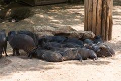 Odwiedzać Jerozolimskiego Biblijnego zoo obraz royalty free