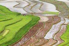 Odwiedzający pola przed zasadzać ryż Zdjęcia Royalty Free