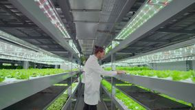 Odwrotny ruch kamera wzdłuż korytarza, nowożytny gospodarstwo rolne, naukowowie w białych żakietach sprawdza, dotyka zieleń zbiory