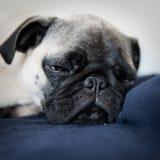Ody de hond Stock Foto