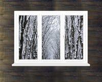 Odziane korony drzewa w okno Zdjęcia Stock