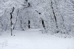 odziani śnieżni drzewa Obraz Stock