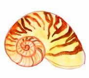 Łodzika seashell Fotografia Royalty Free