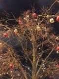 odznaczony drzewo Obraz Royalty Free