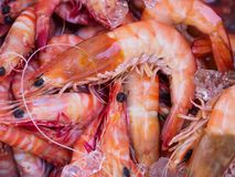 Oean King Prawns. Large ocean King Prawns, with Medium sized Tiger prawns, wild Caught of the Queensland, Coast Australia Royalty Free Stock Photos
