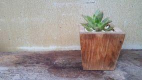 Oechid flower decor in garden. Park outdoor wallpaper design wood foor wood texture Royalty Free Stock Image