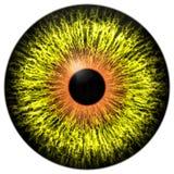 Oeil étranger jaune avec l'anneau orange autour de l'élève Photographie stock libre de droits
