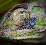 Oeil 5 de caméléons photo libre de droits