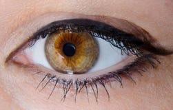 Oeil ambre Images libres de droits