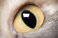 Oeil animal Images libres de droits