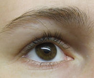 Oeil - brun Photo stock