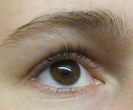 Oeil - brun photo stock