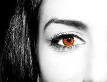 Oeil brun de femme avec les cils extrêmement longs image libre de droits