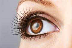 Oeil brun de femme avec les mèches fausses Photos libres de droits