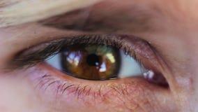 Oeil brun noisette de macro pelliculage clips vidéos