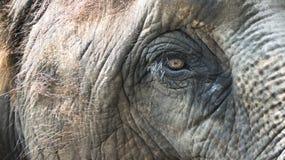 Oeil d'éléphant Images libres de droits