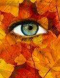 Oeil d'automne Image libre de droits