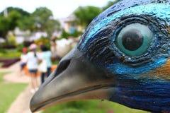 Oeil d'oiseau photo stock