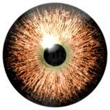 Oeil d'oiseau L'oeil animal avec le pourpre a coloré l'iris, vue de détail dans l'ampoule d'oeil Photographie stock libre de droits