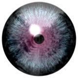 Oeil d'oiseau L'oeil animal avec le pourpre a coloré l'iris, vue de détail dans l'ampoule d'oeil Photographie stock
