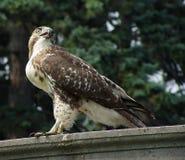 Oeil d'oiseaux Photographie stock