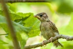 Oeil d'oiseaux Photos libres de droits