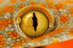 Oeil d'un Gecko de Tokay Photo libre de droits