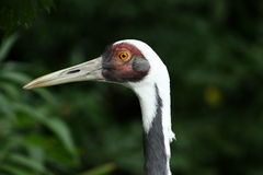 Oeil d'un oiseau photographie stock