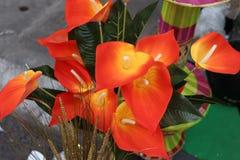 Oeil de birdâs de Speedwell Image stock