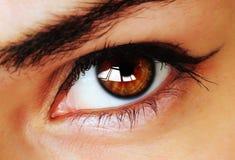 Oeil de Brown avec le renivellement Photographie stock libre de droits