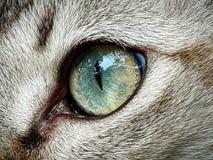 Oeil de chat Image libre de droits