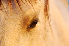 Oeil de cheval Photo stock