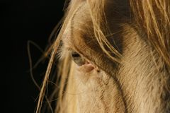 Oeil de cheval Photos stock