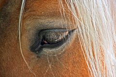 Oeil de cheval Photos stock
