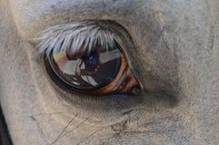 Oeil de cheval Photographie stock libre de droits