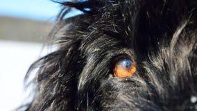 Oeil de chien dans la neige Image stock