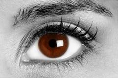 Oeil de couleur brune Photographie stock libre de droits