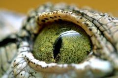 oeil de crocodile Photographie stock libre de droits