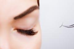 Oeil de femme avec de longs cils Extension de cil Mèches, fin, foyer sélectionné Image stock