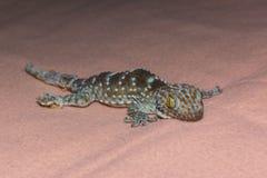 Oeil de gecko photographie stock libre de droits