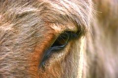 Oeil de l'âne Images libres de droits