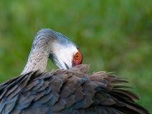 Oeil de l'oiseau Photographie stock