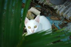 Oeil de la feuille blanche de dos de chat Image stock